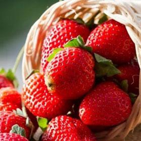 Program zaštite jagode