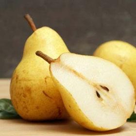 Kruška Kiferova citronka