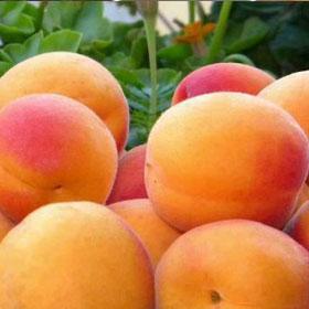 Program zaštite breskve i nektarine