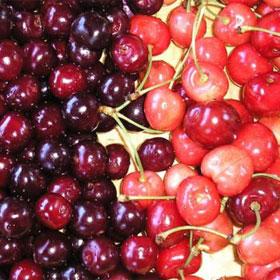 Program zaštite višnje i trešnje